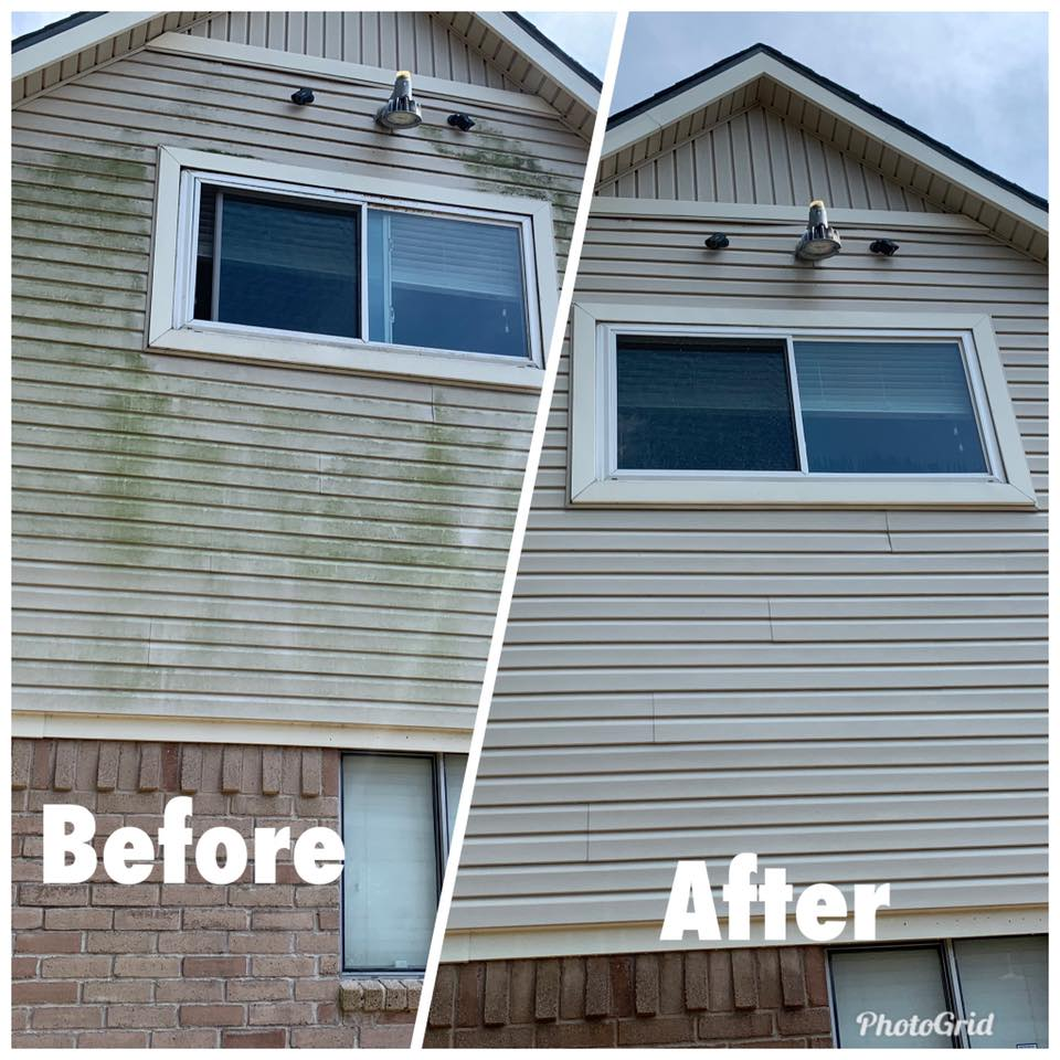 Reliable and Affordable Damage Free Mildew Removal