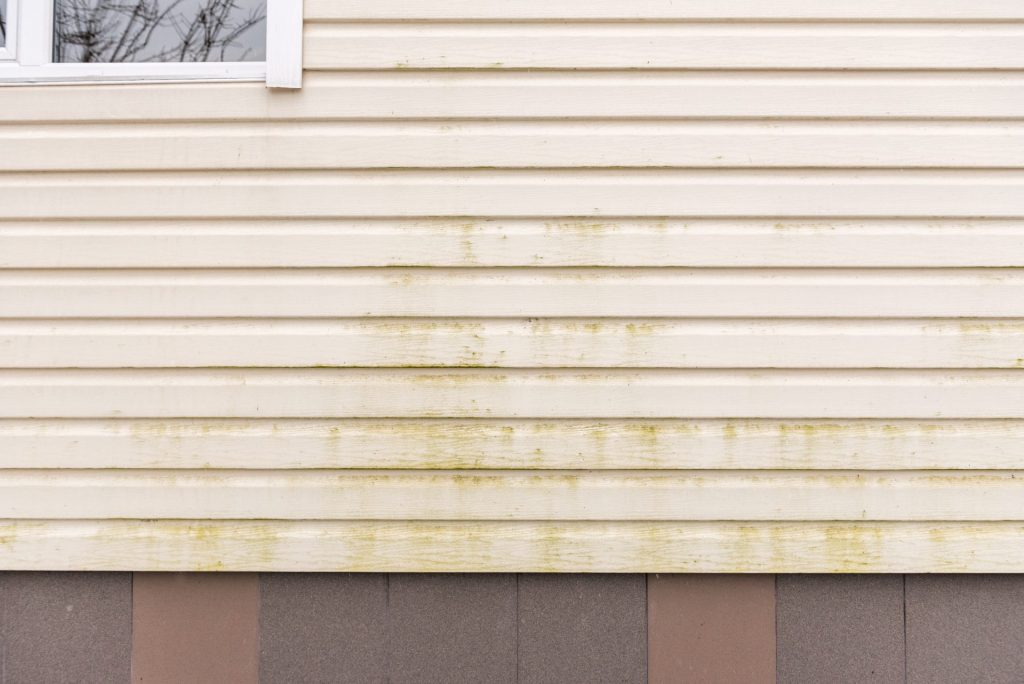 3 Great Reasons To Consider Damage Free Mildew Removal
